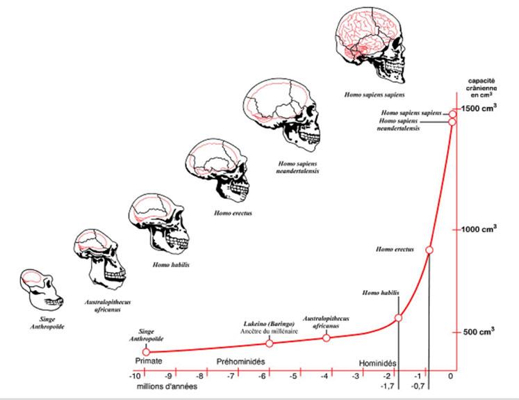 Homo habilisile birlikte beynimizin evrimi inanılmaz bir hız kazanmıştır.