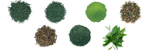 yeşil çay türleri