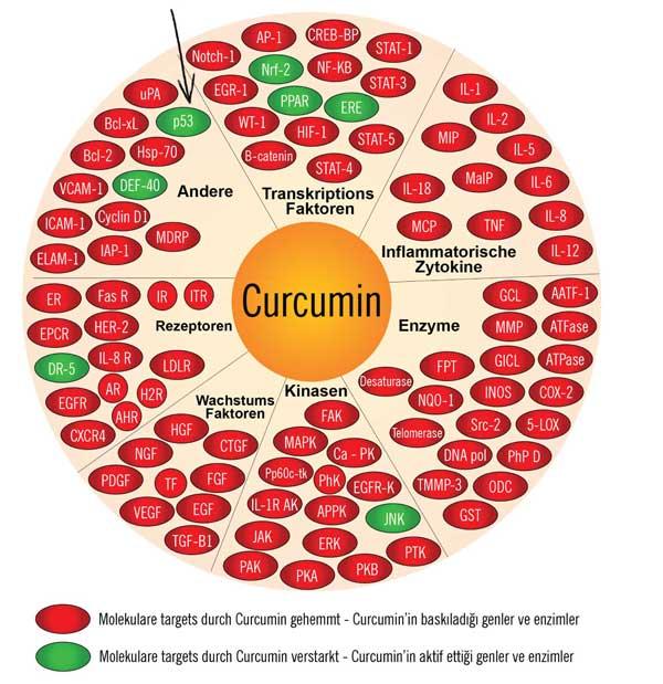 Curcumin gen taplosu