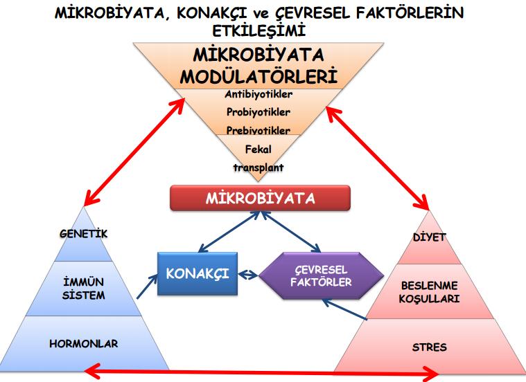 Mikrobiyota tarihçesi