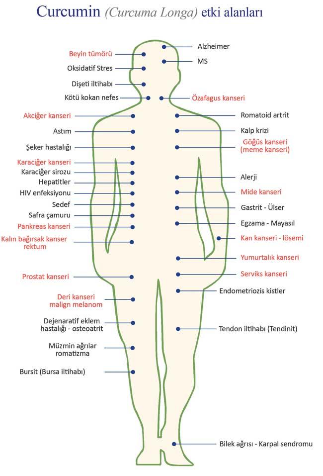 Curcumin zerdeçal etken maddesi etki alanları