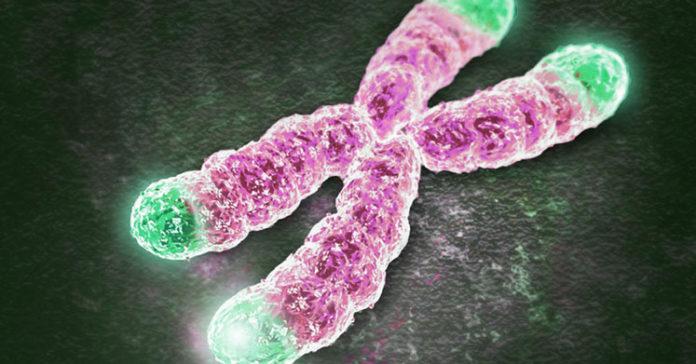 Telomer ve Kanser İlişkisi - Telomer Nedir? Telomer Kısalmasını Neler Tetikler?