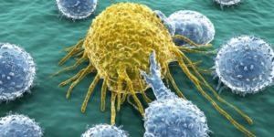 Kanserde kök hücre