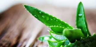Aloe Vera'nın Faydaları: Cilde Şifası, Kabızlık ve Bağışıklık Sistemi