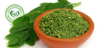 Moringa bitkisi öğütülmüş ve moringa yaprakları