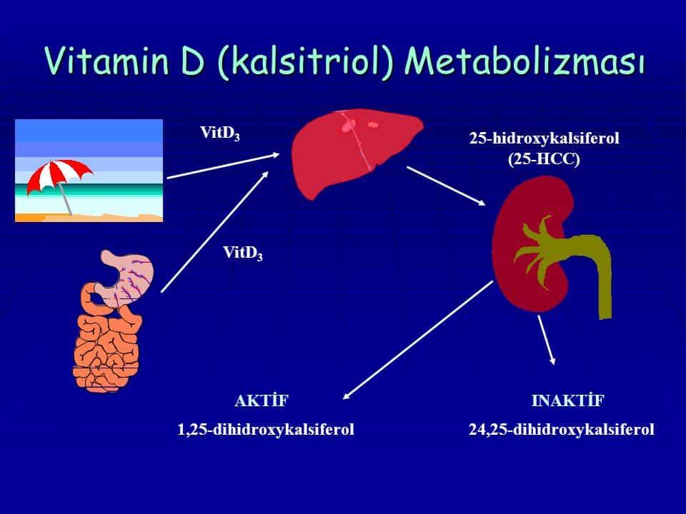 Kalsitriolün Kalsiyum Metabolizması Üzerine Etkileri