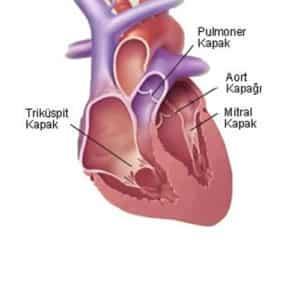 Kalp kapağı hastalığı