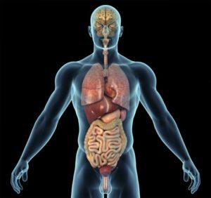 organ temizleme