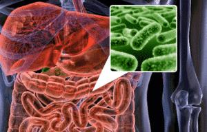 Probiyotik Faydaları
