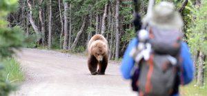 doğa yürüyüşü ayılar