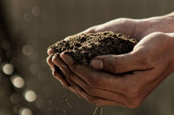 Antidepresan Etkili Toprak Bakterileri: Toprak Bizi Nasıl Mutlu Eder?