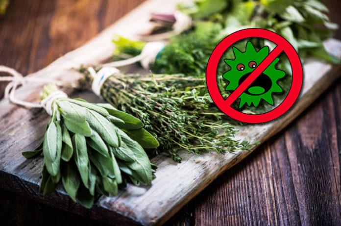 Bağışıklık Sistemini Güçlendiren Enfeksiyonla Savaşan Antiviral Bitkiler
